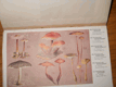 Český houbař